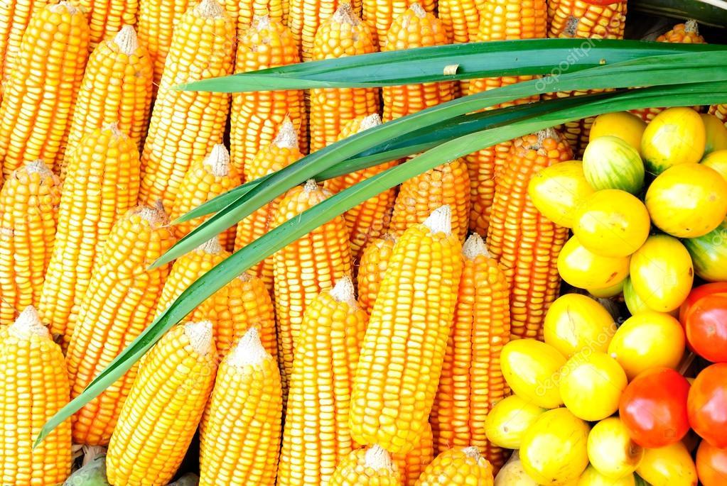 maïs gezond eten — stockfoto © moomsabuy #36055699