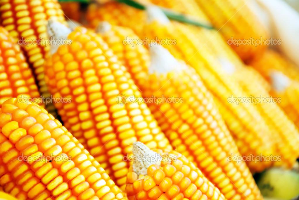 maïs gezond eten — stockfoto © moomsabuy #36055709