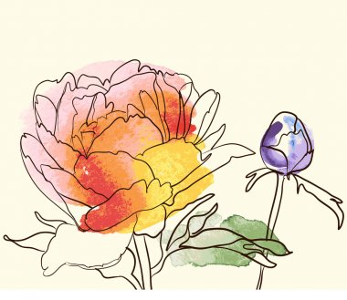 Vector decorative watercolor image peony flowers