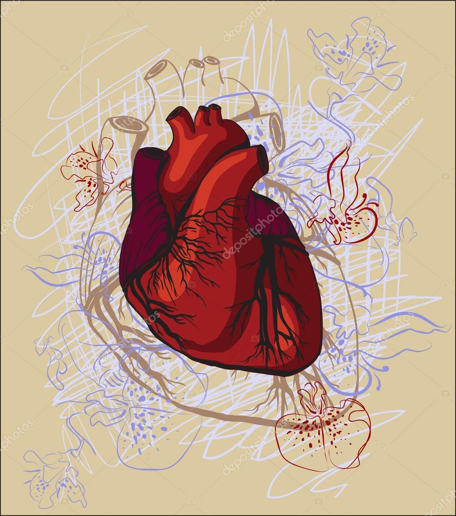 Vector drawing of the heart, anatomical — Stock Vector © mamziolzi ...