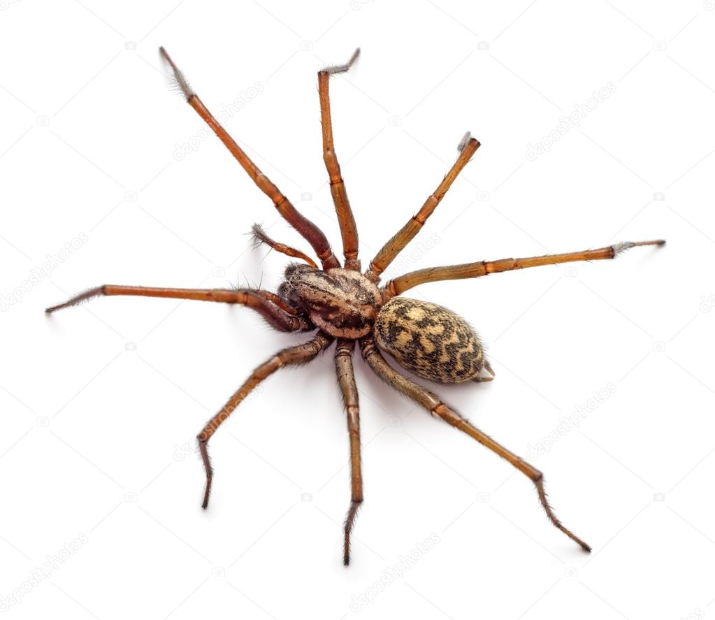 araignée — photographie martina_l © #47095779