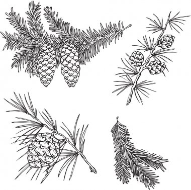 Vector silhouettes of fir branches