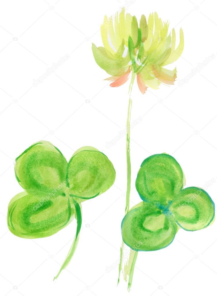 Acuarela de trébol. pintura de trébol de cuatro hojas — Foto de ...