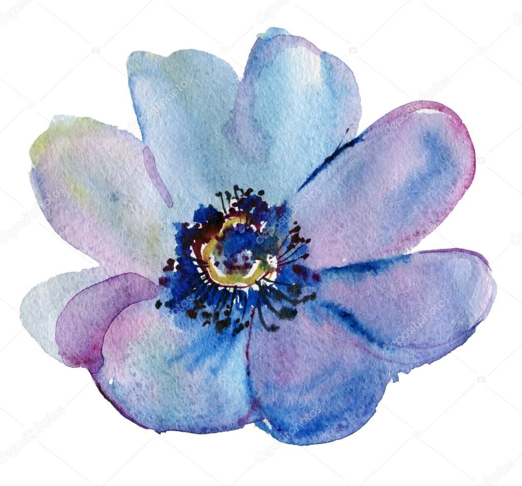 Japanese Anemone flower. Watercolor.