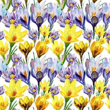 Crocus flowers.