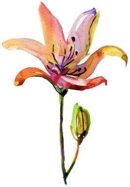 Lilies flowers