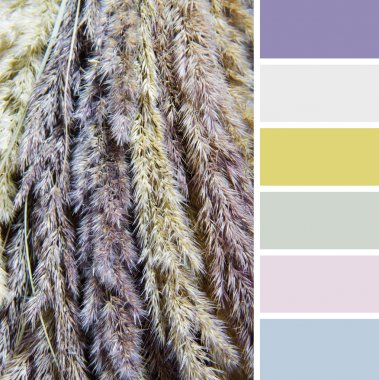 Texture of dry grass , colour palette swatches.