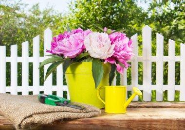 Blooming pink peonies and garden equipment