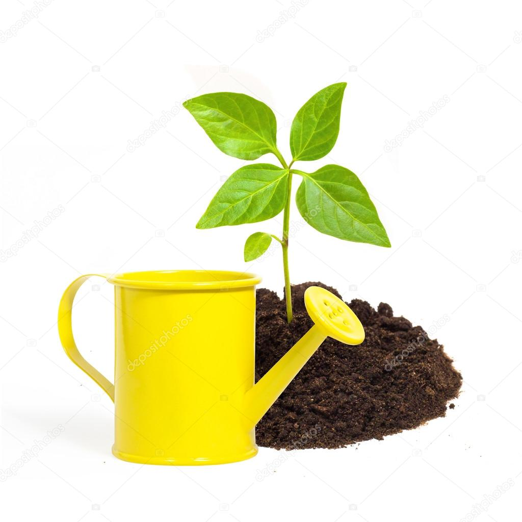 Yellow watering can and a young green plant isolated on white ba