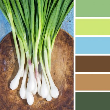 Green onions on a wooden shabby background. colour palette swatches.