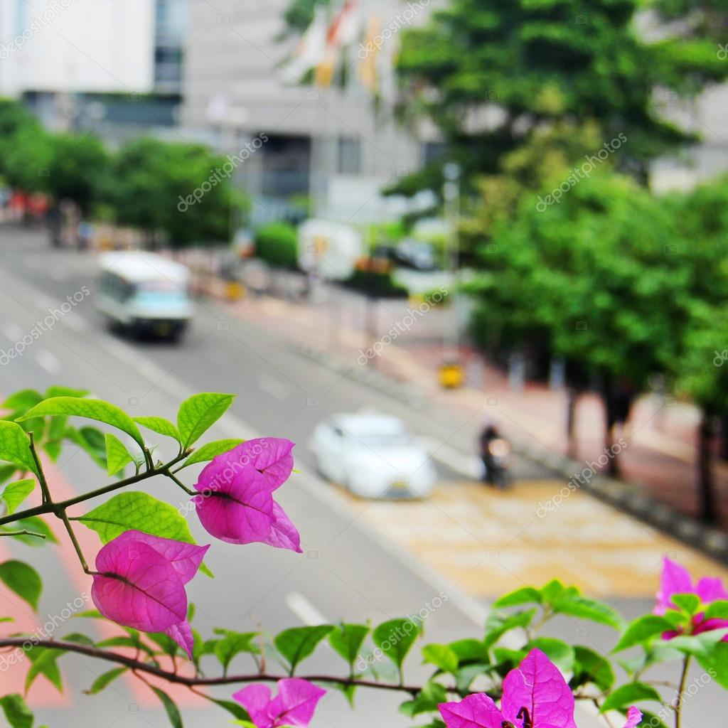 View of the city - the flowers and the road with cars