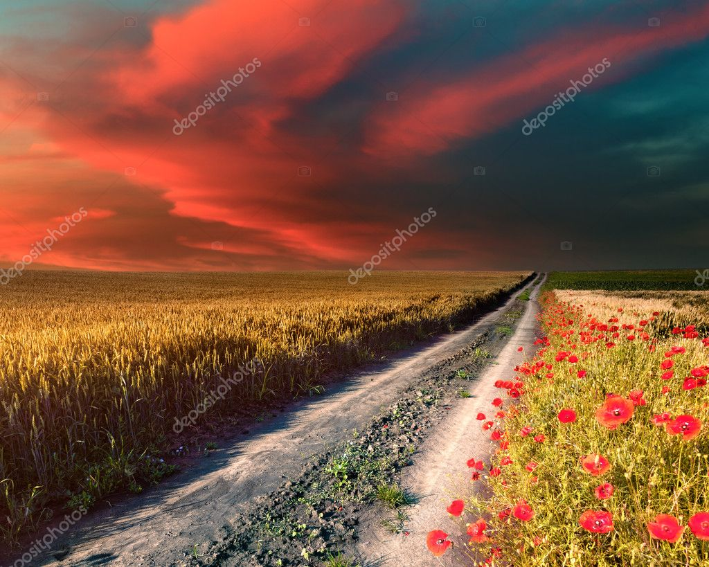 Country road at beautiful sunset