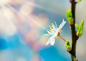 Bílé květy a včely