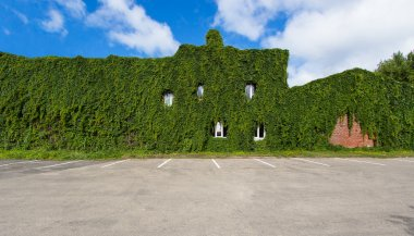 Building overgrown with ivy plants