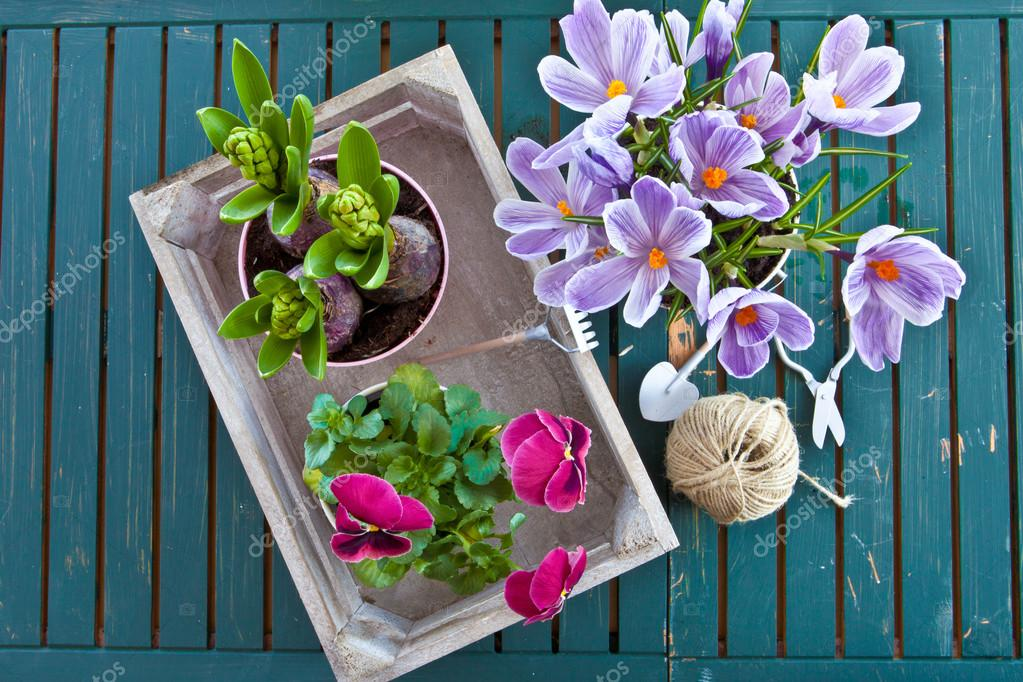 Various potted spring flowers