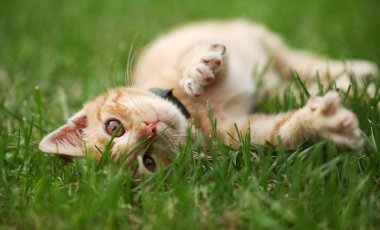 Little cat playing in grass