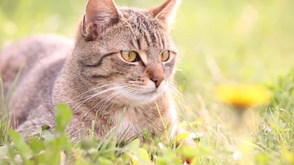 kočka v trávě