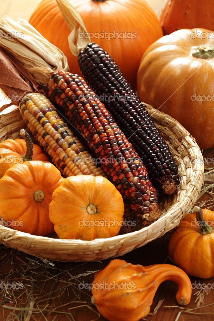 calabazas y arreglo de maíz indio — Foto de stock © MKucova #26352259