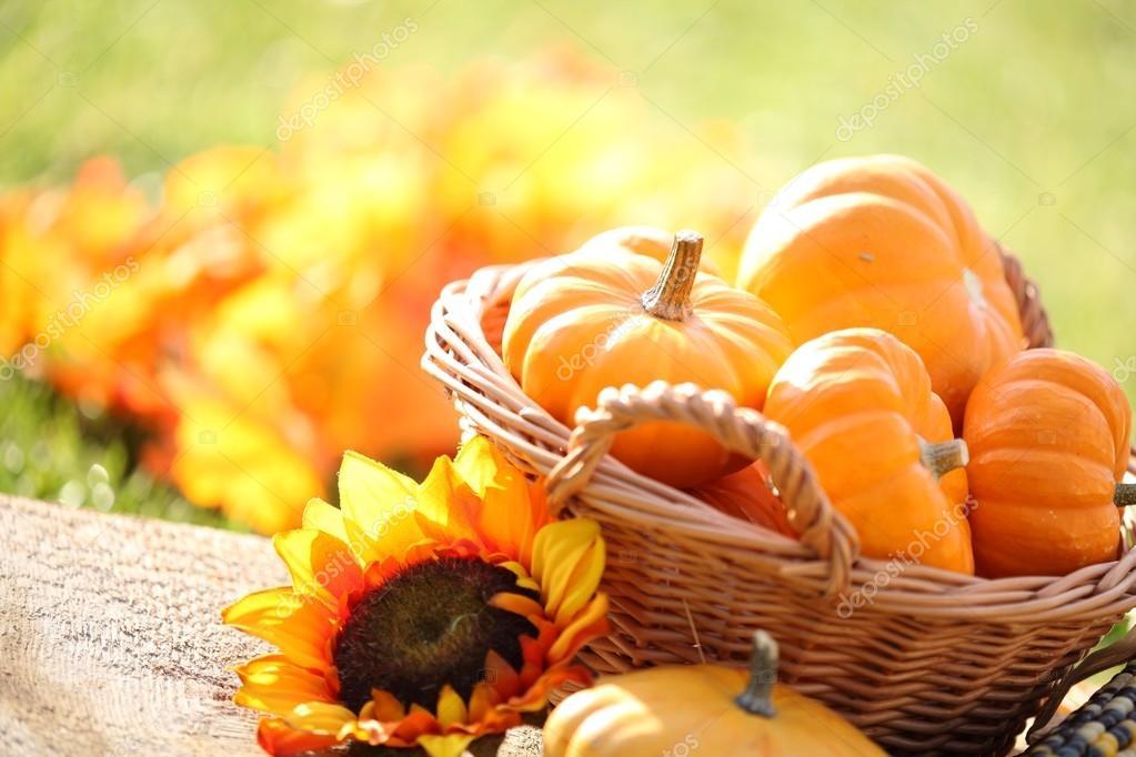 Pumpkins in basket and decorative corns.