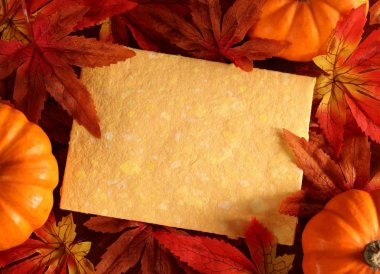 Autumn or thanksgiving greeting card