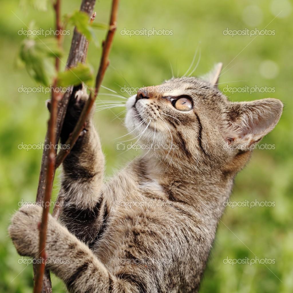 gato joven tratando de escalar en la rama — Foto de stock © MKucova ...
