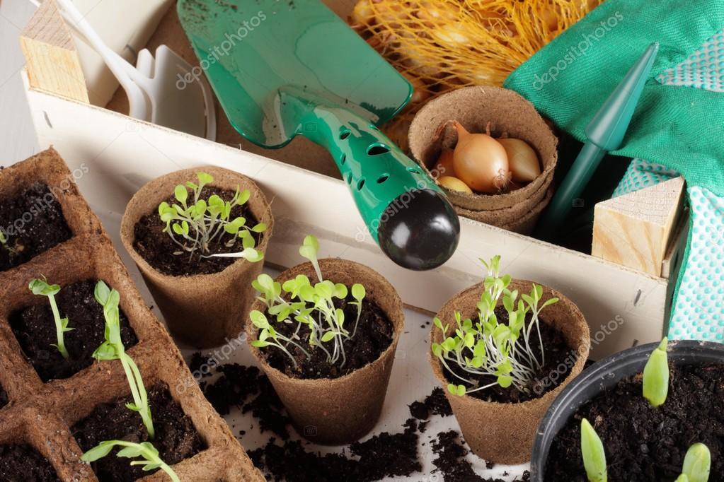 Detail of seedlings, bulbs and garden equipment.