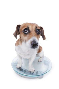 Unsuccessful pet diet