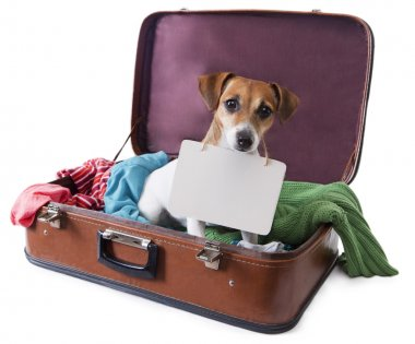 Dog in a suitcase with a tablet on his chest where you can place your text