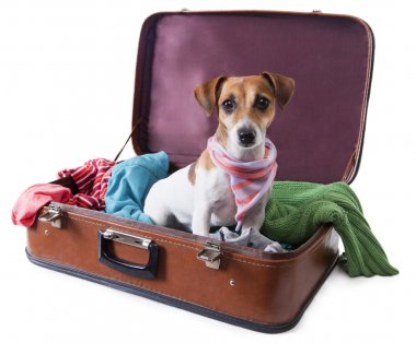 Dog siting in suitcase for traveling