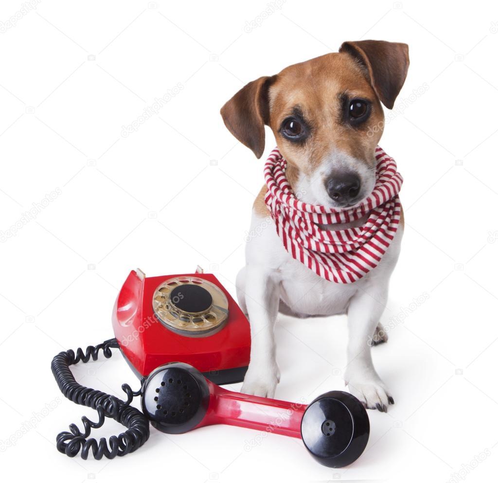 Dog with retro phone