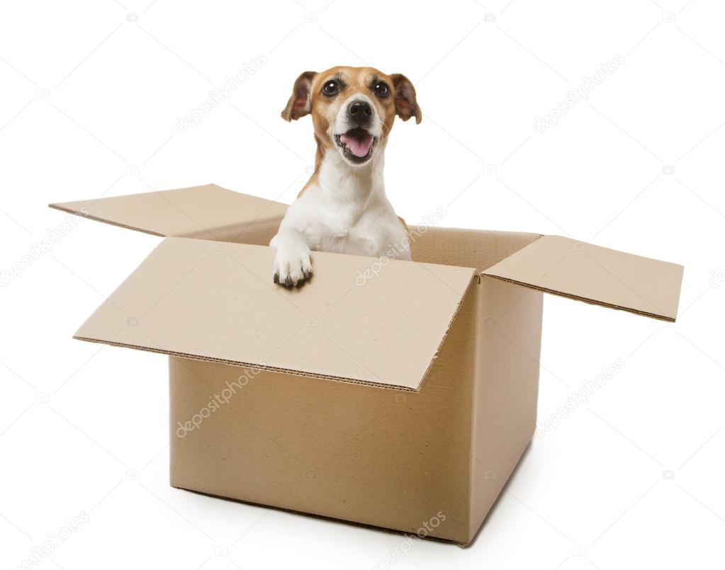 Packaging puppy