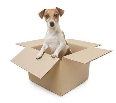 Dog inside the box