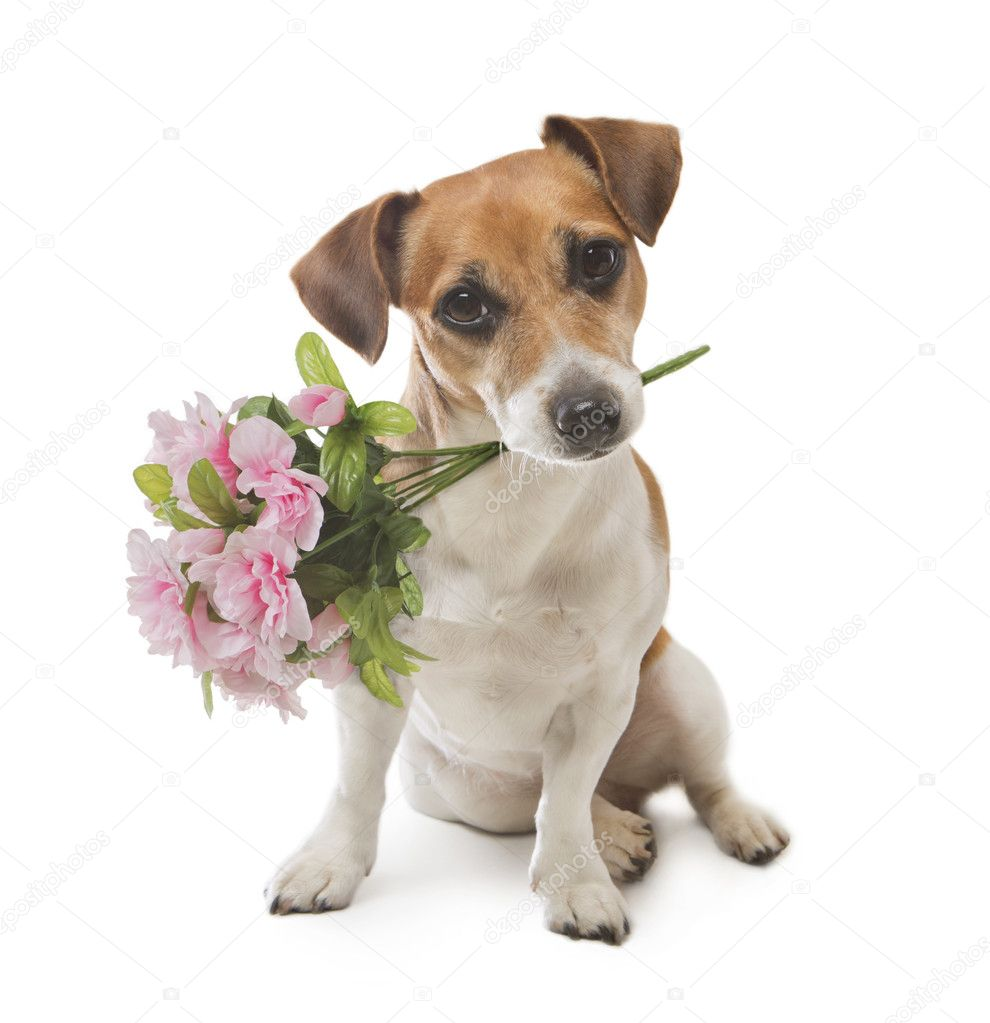 Dog pleasant surprise flower — Stock Photo © Flydragonfly #44878551