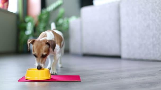 roztomilý malý pes jíst