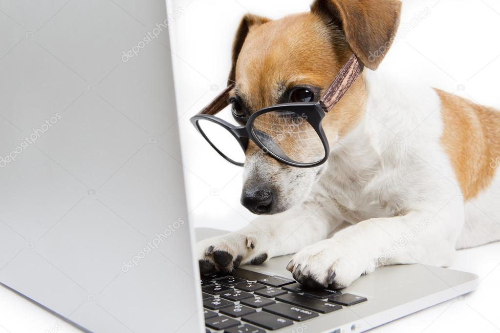 Image result for hond met computer