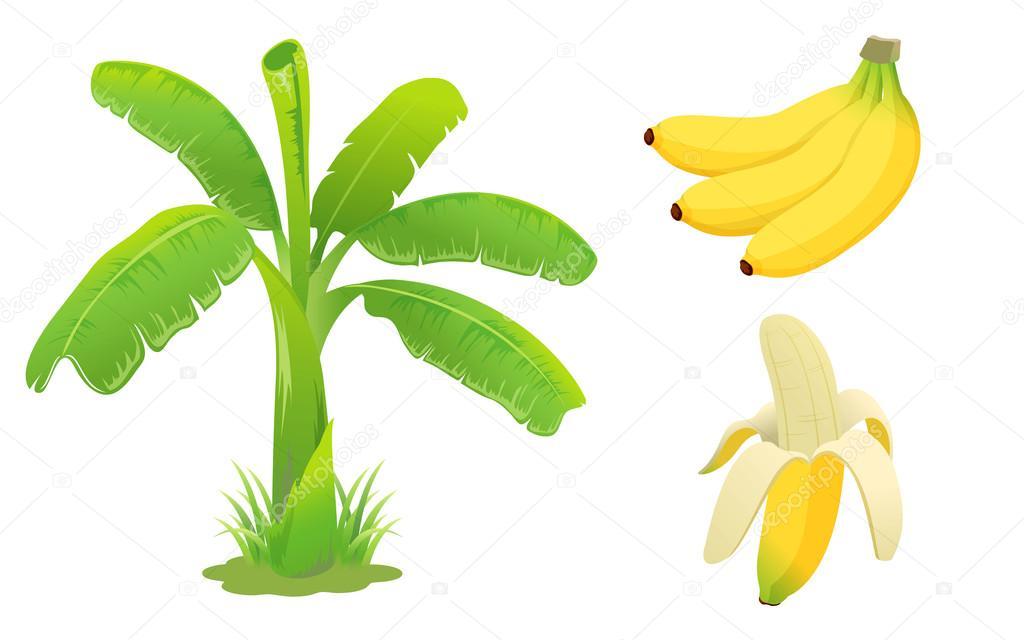 Banana set