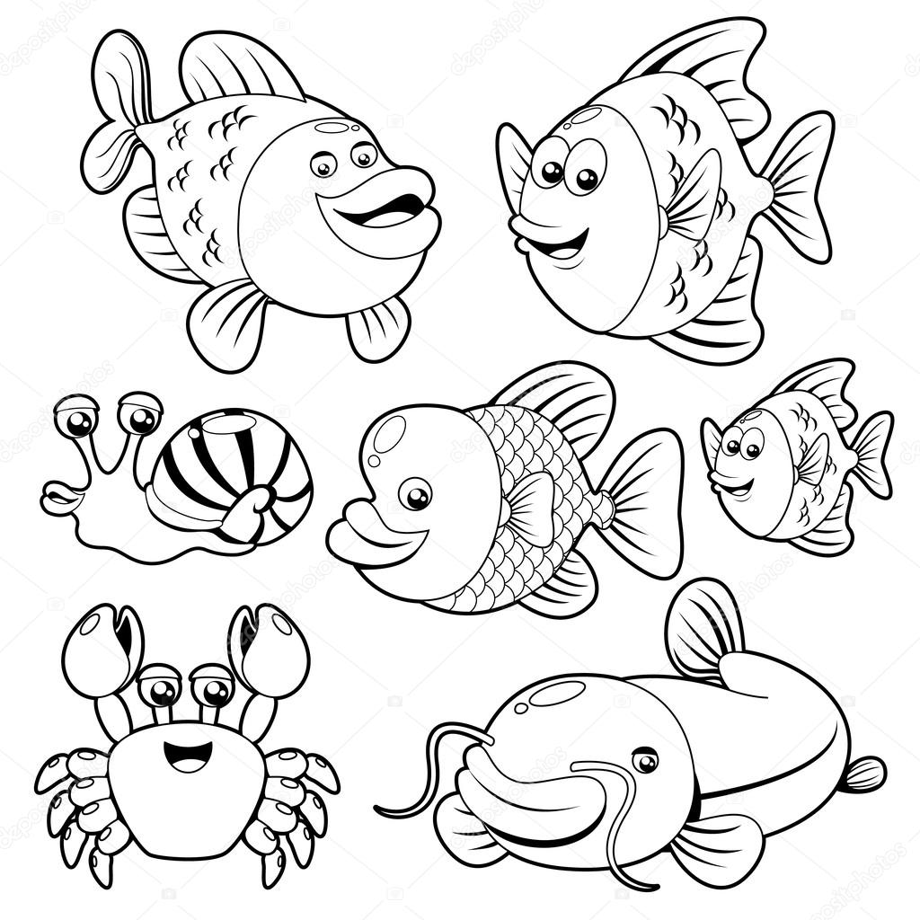 Fishs collection