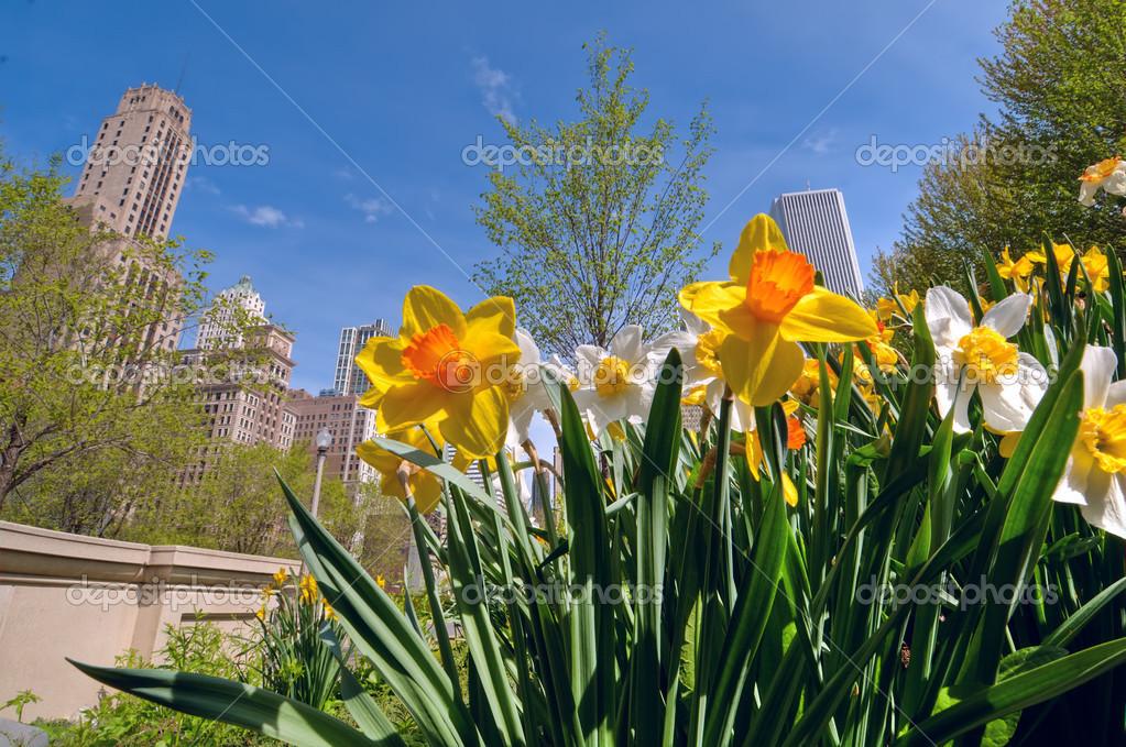 Chicago en primavera — Fotos de Stock © d.images #26429171