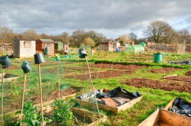 Vegetable allotments