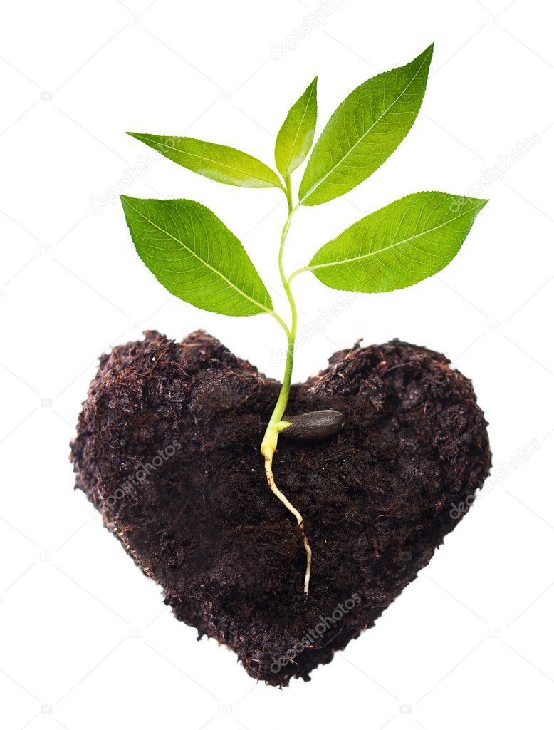 Plant tree in ground with root.