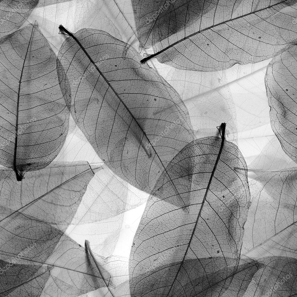 Seamless leaves black and white background.