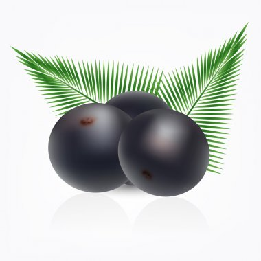 Amazon acai fruit