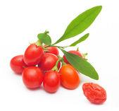 Goji berry, samostatný