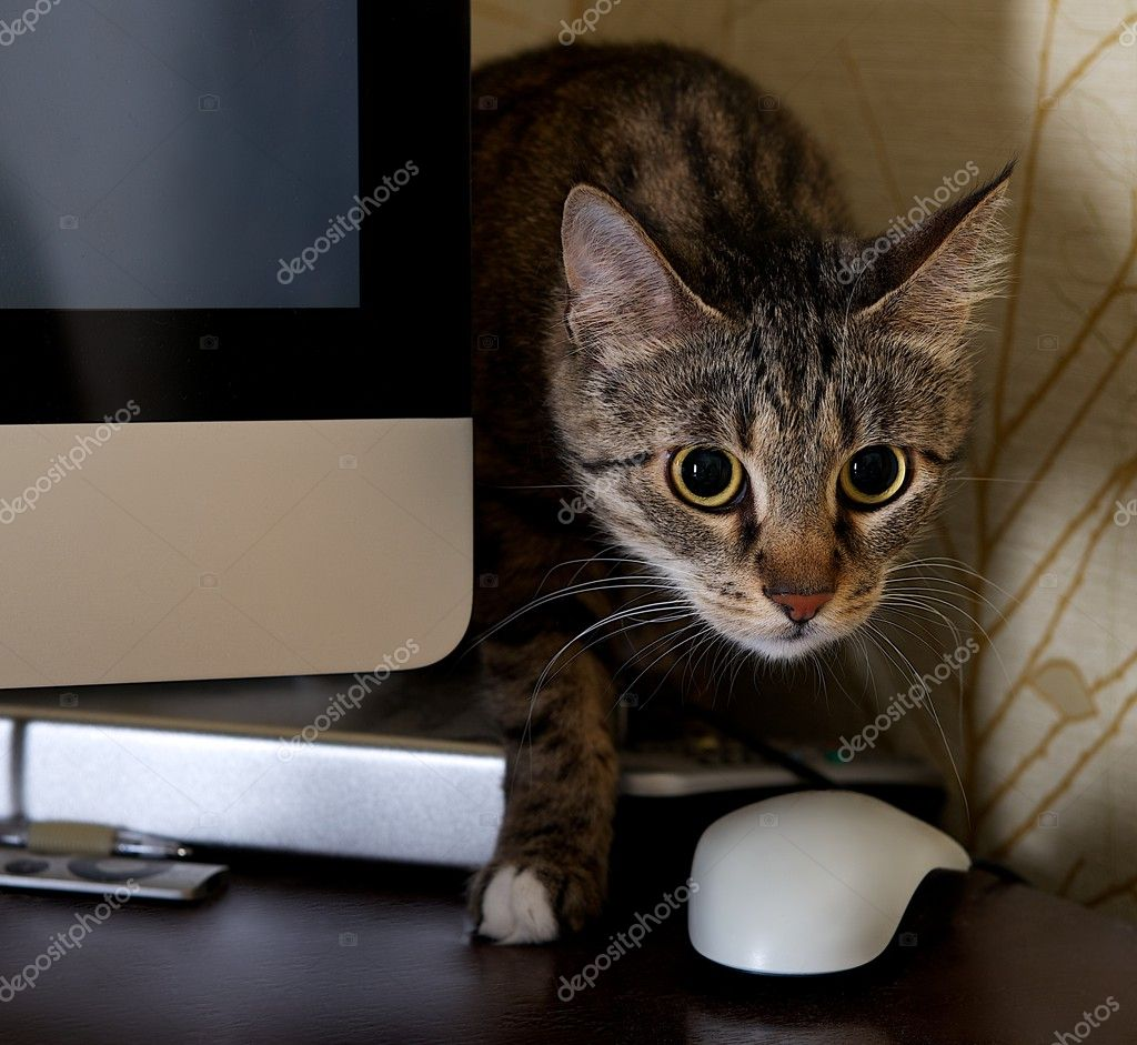 A small cat in a home office - peeping behind a computer screen , domestic cat in natural background, small cat playing at home, young cat,playing cat, interior with cat,blur detail,sharp,focus to cat