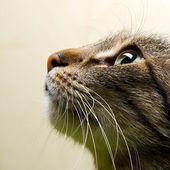 macska portré közelről