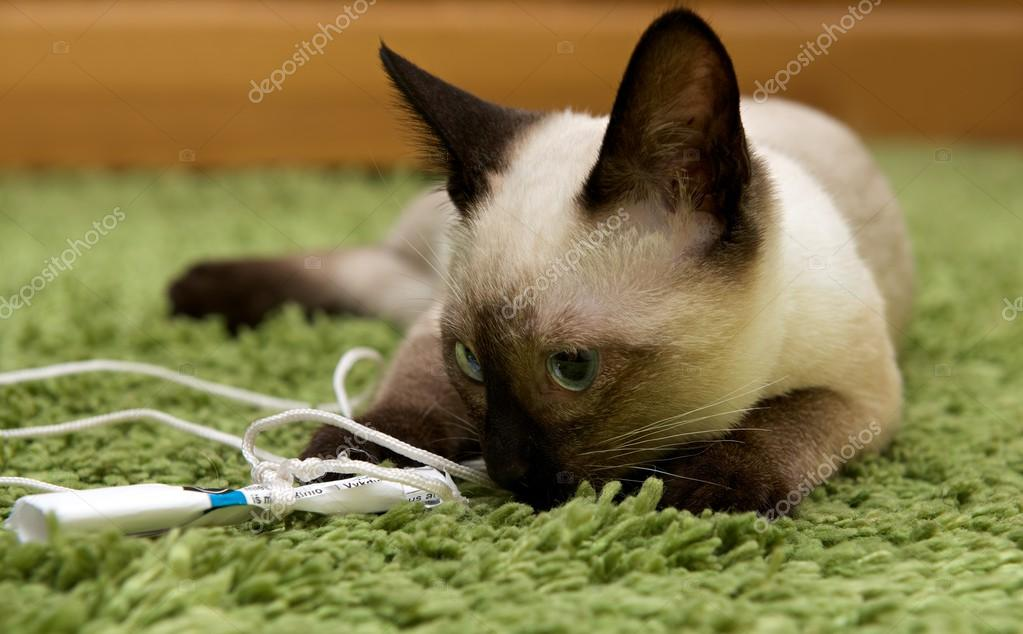 dospívající kočička velký péro