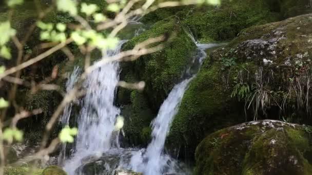 stále shot vodopád v lesích s větvemi stromu před