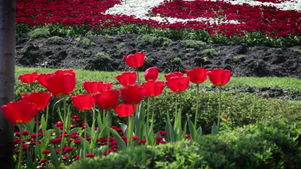 shot z červeného květu tulipány a další květiny