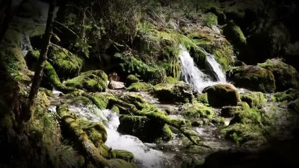 stále shot peřejí řeky v lese