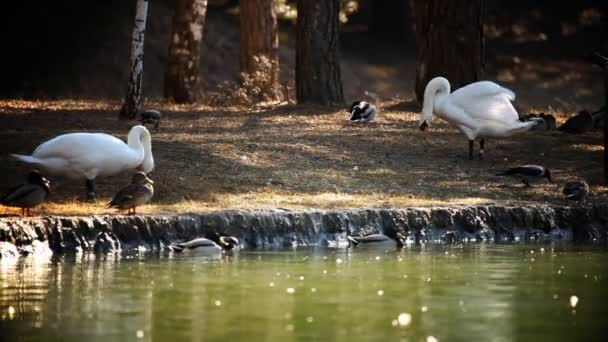 Shot of swans and ducks in nature